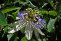 Fotografia: vcela a unknown kvet, fotograf: Marek Lani, tagy: kvt hmyz vcela