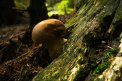 Fotografia: Tu som!, fotograf: Filip Hrkel, tagy: huby, priroda