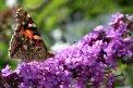 Fotografia: kde je to nase leto, fotograf: Peter Kajsa, tagy: motyl
