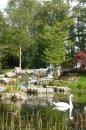 Fotografia: St. Fiochra's garden, Kildare, Ireland, fotograf: Matej Mihalech, tagy: labuť, záhrada
