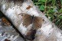 Fotografia: posledný let starého motýľa, fotograf: Matúš Michalko, tagy: motýľ, príroda