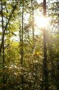 Fotografia: Jesenná príroda, fotograf: Miroslava  Kamenická, tagy: slnko, stromy, jeseň