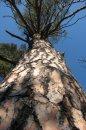Fotografia: Strom v objatí modrej, fotograf: Ján Lang, tagy: strom, obloha