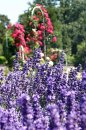 Fotografia: Farebna krasa v parku, fotograf: Martina Kukučková, tagy: fialova, ruzova, zelena