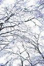 Fotografia: Komplikovaný život :), fotograf: Šimon Trojanovič, tagy: strom