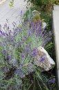 Fotografia: kvety, fotograf: Richard Halak, tagy: .....