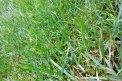 Fotografia: čerstvo pokosená zelená tráva, fotograf: Dominik Čeliga, tagy: tráva , zeleň
