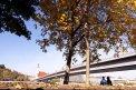 Fotografia: stromy, fotograf: Denis Chropovský, tagy: stromy