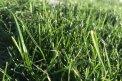 Fotografia: tráva, fotograf: Róbert Petrík, tagy: tráva,grass,weed,zelené,green,