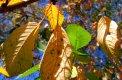 Fotografia: Jesenné lístie, fotograf: Michal Zilincik, tagy: listy, strom, jeseň