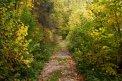 Fotografia: cesta na jeseň, fotograf: Gabriela Véghová, tagy: cesta, jeseň, farebná