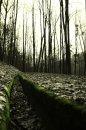 Fotografia: prirodný odtok, fotograf: Dominika Vigašová, tagy: zelen,stromy,priroda