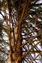 Fotografia: Strom, fotograf: Igor Kollárovics, tagy: strom, konáre