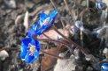 Fotografia: príchod jari, fotograf: Stefan Schwartz, tagy: cintorín, kvet, fialka