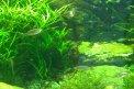 Fotografia: Rybičky = stopa života, fotograf: Marianna Poláková, tagy: rybičky, akvárium