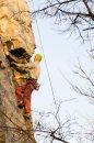 Fotografia: Je vždy vyššia a ťažšie, ako to vyzerá. , fotograf: Filip Ogurcak, tagy: horolezec, skala