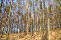 Fotografia: dobre rano, fotograf: Dominika Červeňová, tagy: les, obloha, tiene, svetlo