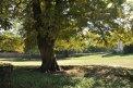 Fotografia: strom, fotograf: Juraj Simek, tagy: strom