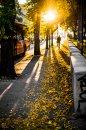 Fotografia: Jesenné lúče, fotograf: Andrej Lenčucha, tagy: jesen, slnko, postava