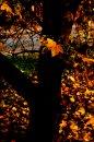 Fotografia: Jeseň v parku, fotograf: Silvia Budayová, tagy: jeseň, lístie, strom