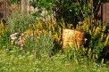 Fotografia: medzi kvetmi, fotograf: Juraj Simek, tagy: sud, kvet, príroda