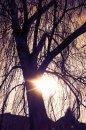 Fotografia: Západ zimného slnka., fotograf: Tomáš Silný, tagy: slnko, zima, zapad, strom