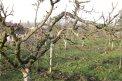 Fotografia: strom a príroda vo vinohradoch, fotograf: Dominik Čeliga, tagy: strom, vinohrady, príroda