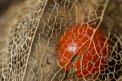 Fotografia: Cervena, fotograf: Lukas Doubravsky, tagy: cervena bobula