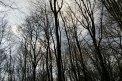 Fotografia: Som v lese, fotograf: Eduard  Botťánek, tagy: Les