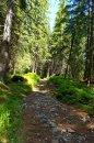 Fotografia: príroda, fotograf: Boris Bacigál, tagy: zeleň, stromy