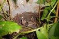Fotografia: hniezdo, fotograf: Boris Bacigál, tagy: listy, hniezdo, kamene