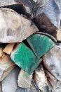 Fotografia: drevo, fotograf: Erik Schwarz, tagy: drevo, zelené drevo