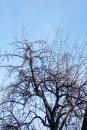Fotografia: strom, fotograf: Erik Schwarz, tagy: strom, konáre