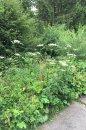 Fotografia: kvety, fotograf: Richard Halak, tagy: kvety