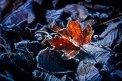 Fotografia: Obmrznutý list, fotograf: Denis Goga, tagy: list, zima, pozadie, ostrosť, oranžová